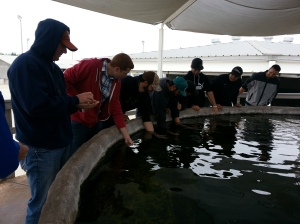 We all got the chance to feed the stingrays some shrimp.
