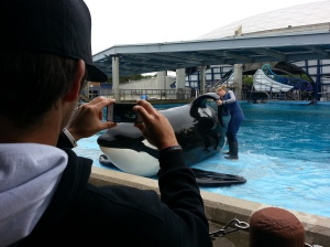 Cody Buckel snaps a photo of a trainer giving the biggest killer whale a rubdown.
