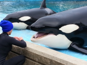 SeaWorld buys the fish it feeds its whales from the same supplier that Red Lobster uses.