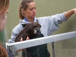 A SeaWorld employee feeds a little otter.