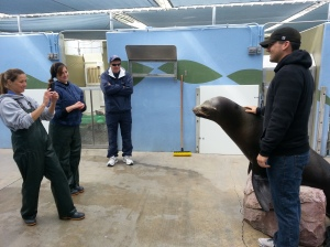 Brett Nicholas poses with Dylan the sea lion in an area the public doesn't get to visit.